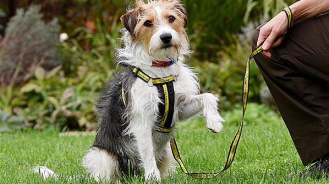 كلب ضال في لندن لا يفهم غير اللغة الفرنسية
