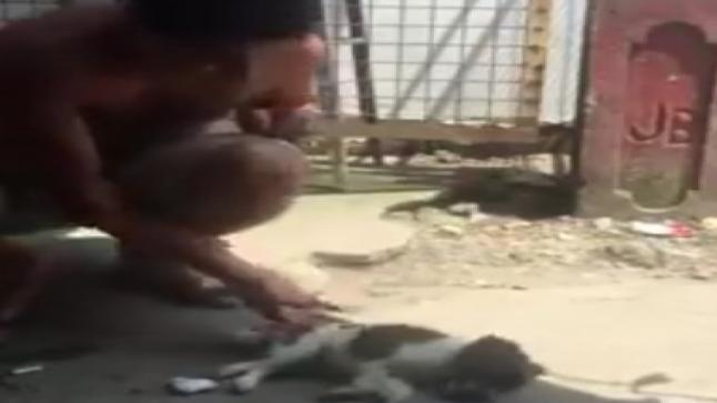 فيديو   رجل ينقذ حياة جرو صغير بموقف أقرب إلى المعجزة