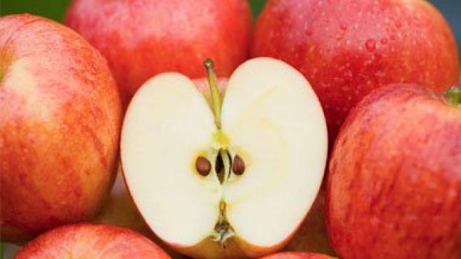 البروفيسور فاتسل : تناول التفاح بانتظام يبعد عنك الطبيب